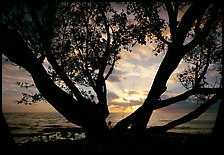 Sunrise framed by tree, Elliott Key. Biscayne National Park, Florida, USA.