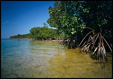 Mangrove trees in shallow water, Elliott Key, afternoon. Biscayne National Park, Florida, USA. (color)