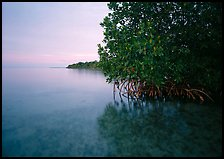 Coastal wetland community of mangroves at dusk, Elliott Key. Biscayne National Park, Florida, USA. (color)