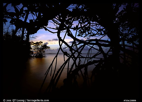 Silhouetted mangroves at dusk. Biscayne National Park (color)
