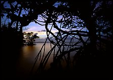 Silhouetted mangroves at dusk. Biscayne National Park, Florida, USA. (color)