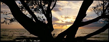 Ocean sunrise seen through branches of tree. Biscayne National Park, Florida, USA.
