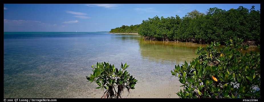 Eliott Key shoreline with mangroves. Biscayne National Park (color)
