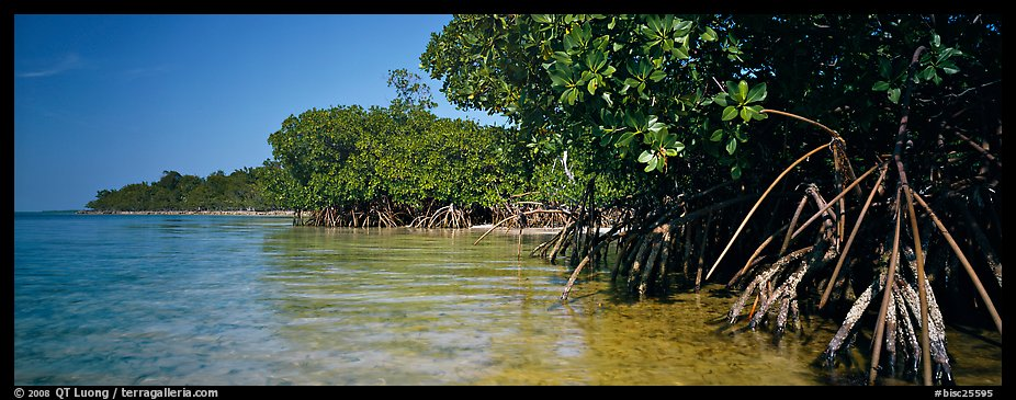 Mangrove coastline. Biscayne National Park (color)