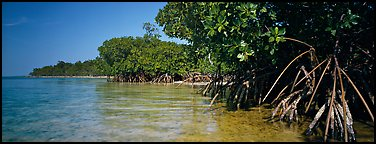 Mangrove coastline. Biscayne National Park (Panoramic color)