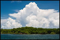 Cumulonimbus clouds above Elliot Key mangroves. Biscayne National Park, Florida, USA. (color)