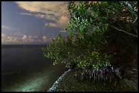 Mangroves and Biscayne Bay at night, Convoy Point. Biscayne National Park, Florida, USA. (color)