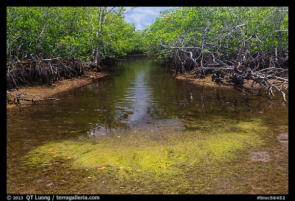 Stream lined up with mangroves. Biscayne National Park (color)