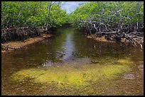 Stream lined up with mangroves. Biscayne National Park, Florida, USA. (color)