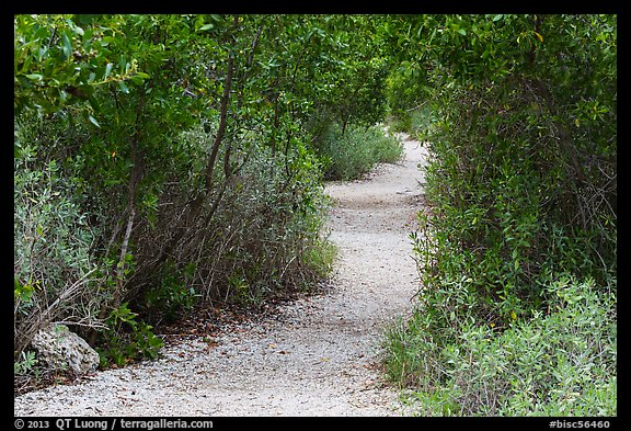 Trail, Convoy Point. Biscayne National Park (color)