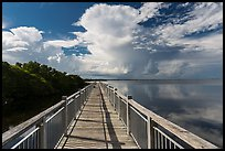 Boardwalk and mangroves, Convoy Point. Biscayne National Park, Florida, USA. (color)