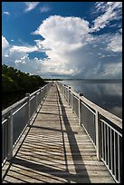 Boardwalk and Biscayne Bay, Convoy Point. Biscayne National Park, Florida, USA. (color)
