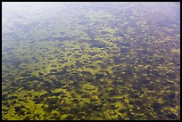 Aerial view of seagrass in Biscayne Bay. Biscayne National Park ( color)