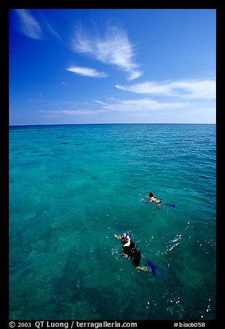 Snorkelers over a coral reef. Biscayne National Park (color)
