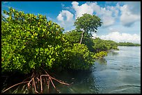 Mangrove shore, Swan Key. Biscayne National Park ( color)