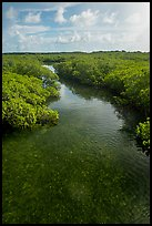 Creek. Biscayne National Park ( color)