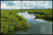 Narrow creek. Biscayne National Park ( color)