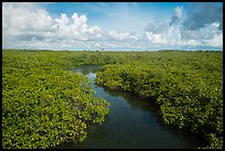 Channel in mangrove forest. Biscayne National Park ( color)