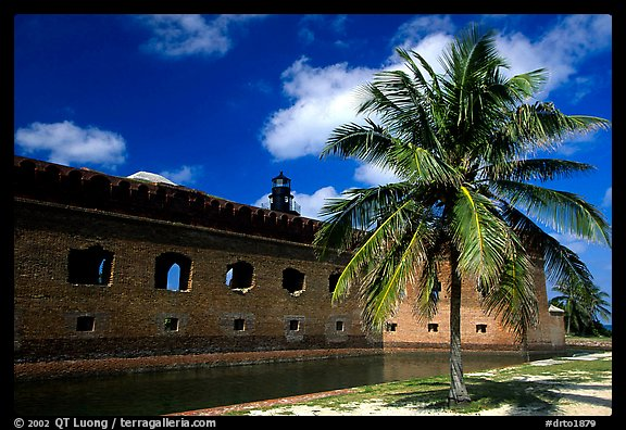 Palm tree and Fort Jefferson. Dry Tortugas National Park (color)