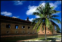 Palm tree and Fort Jefferson. Dry Tortugas National Park, Florida, USA. (color)