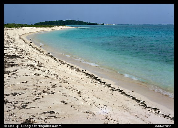 Beach on Bush Key with beached seaweed. Dry Tortugas National Park, Florida, USA.