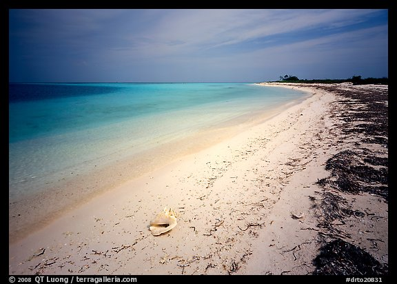 Tropical beach on Bush Key with conch shell and beached seaweed. Dry Tortugas National Park (color)
