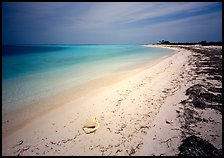 Tropical beach on Bush Key with conch shell and beached seaweed. Dry Tortugas National Park, Florida, USA. (color)