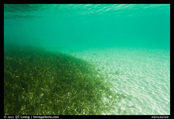 Picture photo underwater view of seagrass and sand for Seagrass landscaping