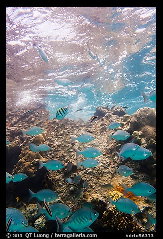 Tropical fish around Avanti wreck. Dry Tortugas National Park (color)