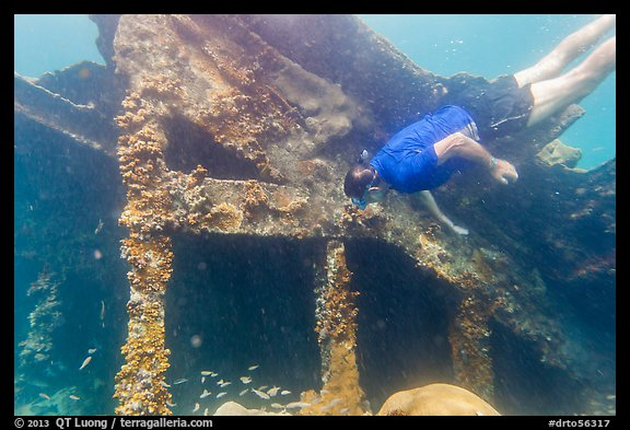 Free diver exploring Windjammer Wreck. Dry Tortugas National Park (color)