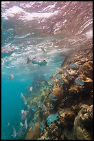 Marine wildlife around Windjammer Wreck. Dry Tortugas National Park ( color)