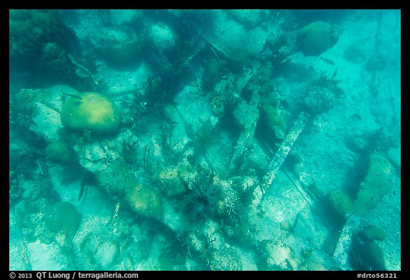 Coral and Windjammer Wreck. Dry Tortugas National Park (color)