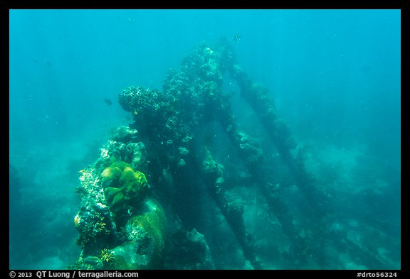Sunken wreck of Avanti. Dry Tortugas National Park (color)
