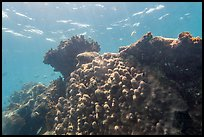 Coral-covered wreck of Windjammer. Dry Tortugas National Park, Florida, USA. (color)