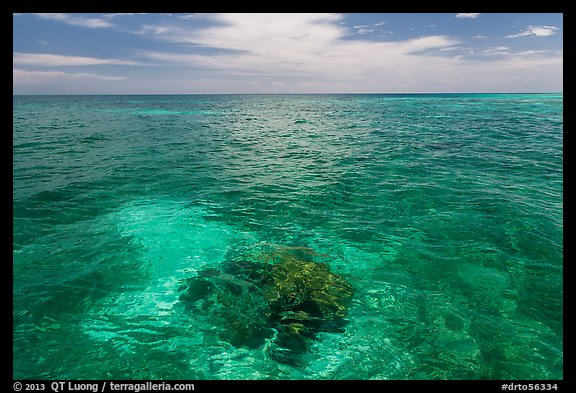 Coral head and ocean, Loggerhead Key. Dry Tortugas National Park (color)