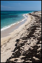 Beached seagrass and shoreline, Loggerhead Key. Dry Tortugas National Park ( color)