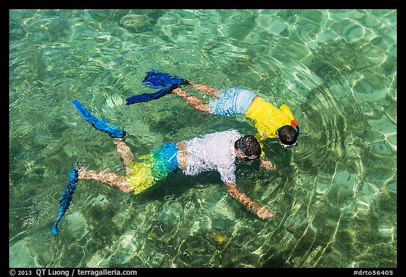 Man and boy seen snorkeling from above. Dry Tortugas National Park (color)