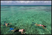 Snorkelers and reef, Garden Key. Dry Tortugas National Park, Florida, USA. (color)
