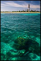 Coral head and Loggerhead Key lighthouse. Dry Tortugas National Park, Florida, USA. (color)