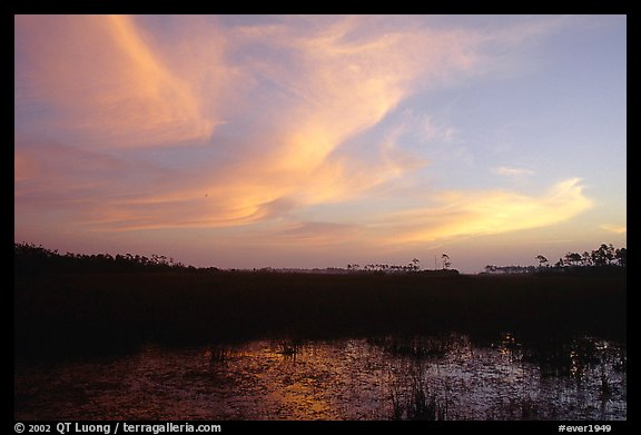 Dawn on marsh and sawgrass prairie. Everglades National Park (color)