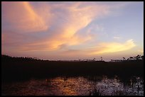Dawn on marsh and sawgrass prairie. Everglades National Park, Florida, USA.