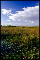 Freshwater marsh with aquatic plants and sawgrass near Ahinga trail, late afternoon. Everglades National Park, Florida, USA.