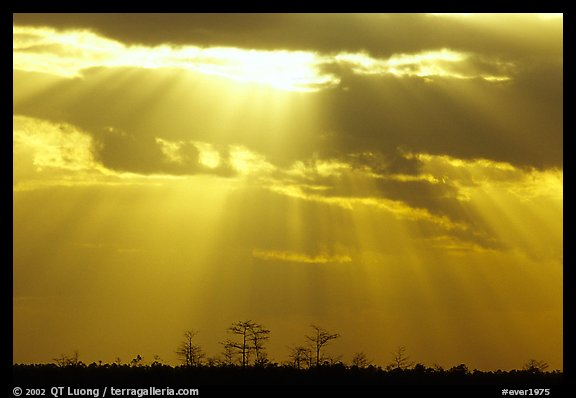 Cypress and sun rays, sunrise, near Pa-hay-okee. Everglades National Park, Florida, USA.