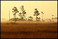 Pineland environment at sunrise, near Mahogany Hammock. Everglades National Park, Florida, USA. (color)