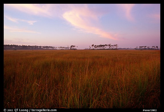 Sawgrass prairie environment with distant pinelands near Mahogany Hammock. Everglades National Park (color)