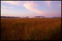 Sawgrass prairie environment with distant pinelands near Mahogany Hammock. Everglades National Park, Florida, USA.