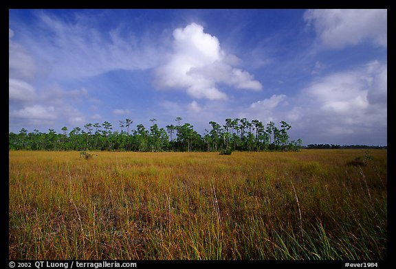 Sawgrass prairie and slash pines near Mahogany Hammock. Everglades National Park (color)