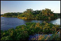 Eco pond with birds in distant trees, evening. Everglades National Park, Florida, USA.