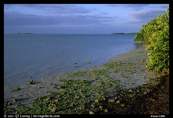 Shore of Florida bay at low tide, morning. Everglades National Park (color)