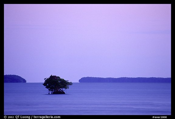 Mangroves and low islands in Florida Bay, dusk. Everglades National Park (color)